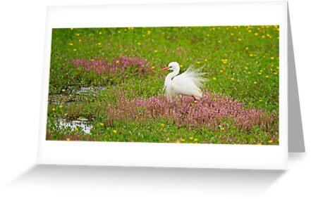 Egret by Sea-Change