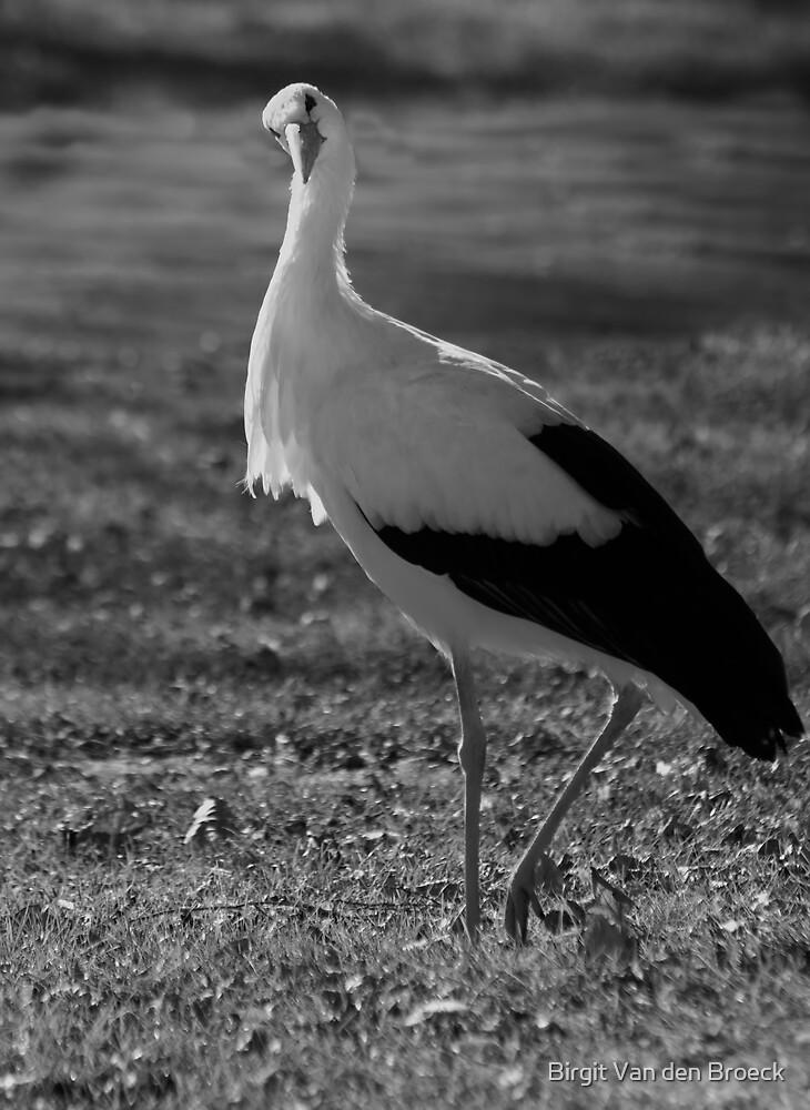 Gracious stork by Birgit Van den Broeck
