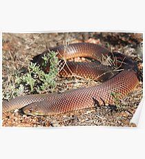 Mulga Snake Poster