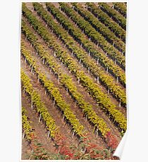 Autumn Vineyard Poster