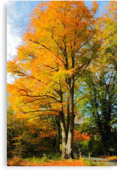 Autumn beech by Stephen J  Dowdell