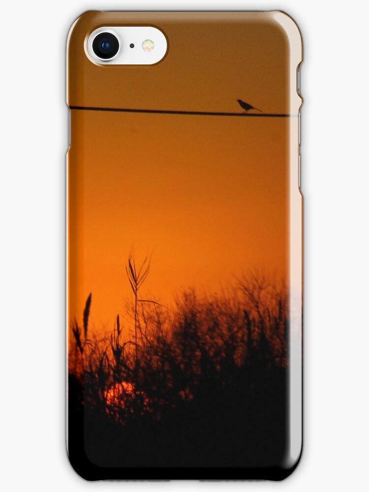 Morning Bird iPhone Case by Denis Marsili