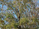 Autumn Branches by Artberry