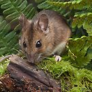Woodmouse on a Log by kernuak