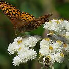 Butterfly and Hoverfly, Mt. Rainier by Penny Ward Marcus