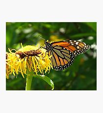 The Monarch ascending his crown Photographic Print