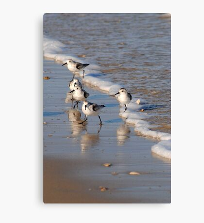 Piping Plovers 2 Canvas Print