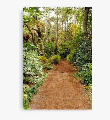 Secret Path Canvas Print