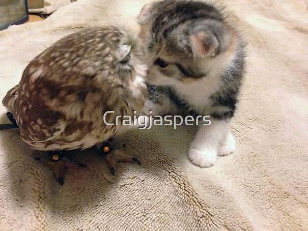 Owl  & Kitten Love P2 by Craigjaspers