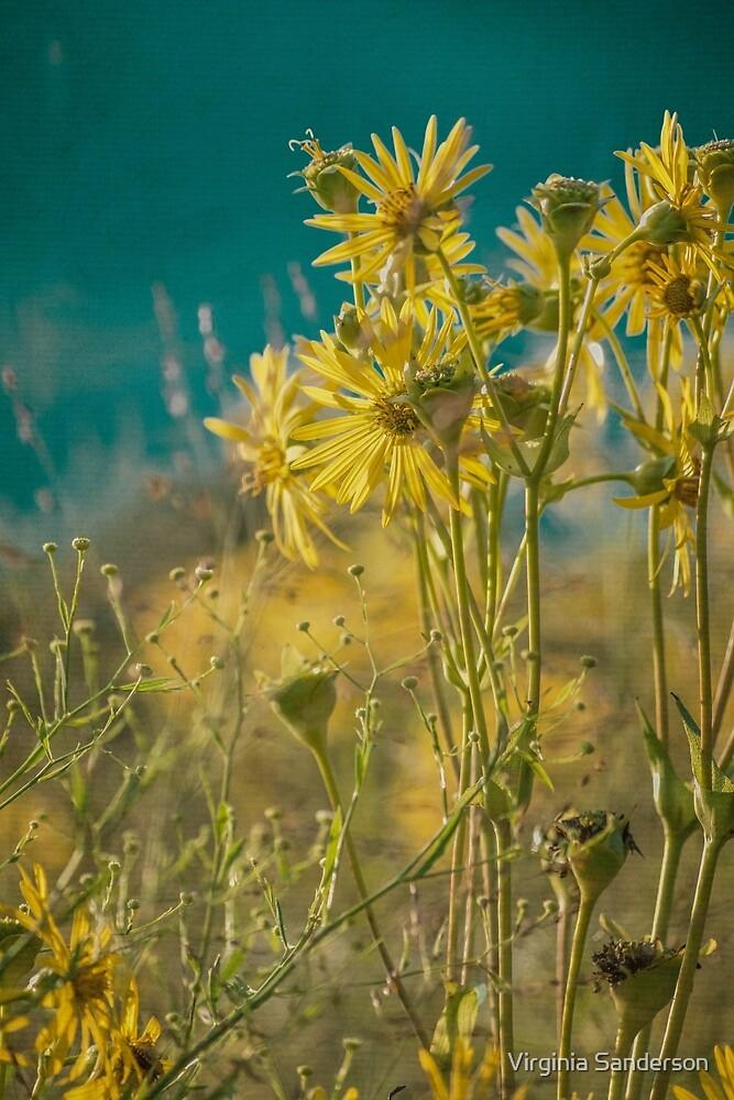jaune d'or by Virginia Sanderson