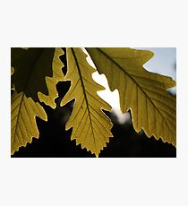 Leaves on a Sunny Day Photographic Print