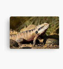 australia dragon Canvas Print