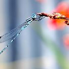 Damselfly by Olivelle