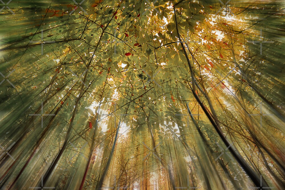 Forest of Dreams by Geoff Carpenter