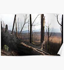 Post February 2009 Bushfires Victoria - Marysville July09 Poster