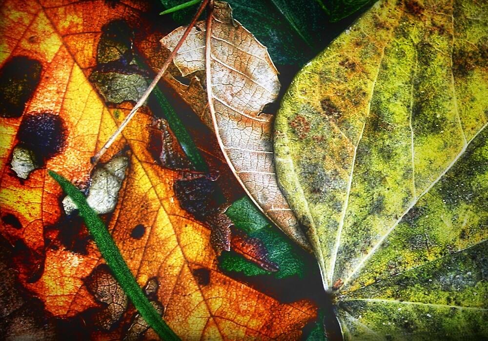 Autumn Abstract by Nadya Johnson