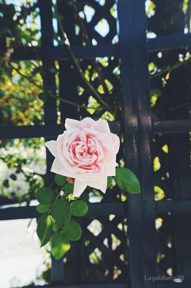 Rose Garden at the NY Botanical Gardens by Lagoldberg28
