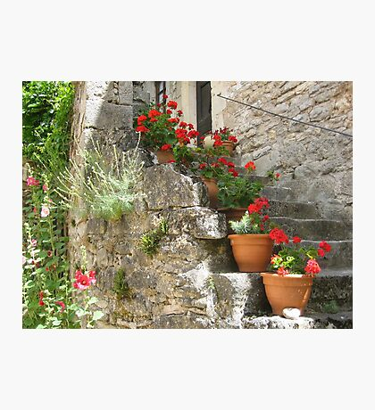 Decorative potted plants Photographic Print
