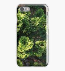 Trees at the NY Botanical Garden iPhone Case/Skin