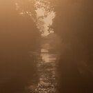 Canal Sunrise by Stuart Jenkins