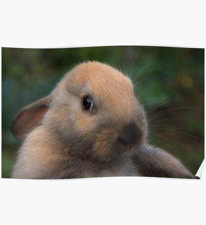 Sweet rabbit Poster
