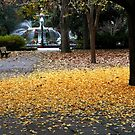 A Carpet of Golden Leaves by SummerJade