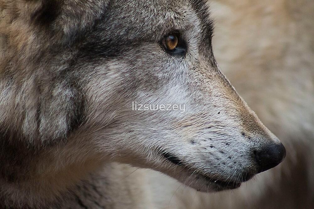 Wolf by lizswezey