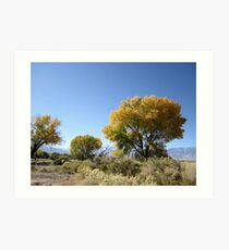 Trees In Their Finest Art Print