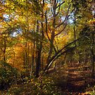 A Quick Autumn Hike by Virginia Shutters