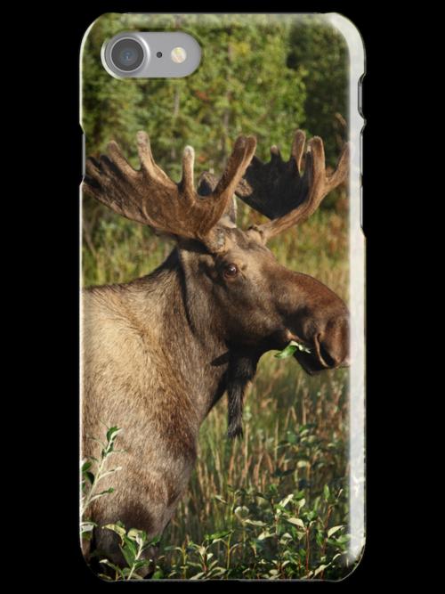 i Moose by Gary L   Suddath