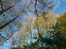 Autumn Composition by Artberry