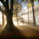 Misty Autumn Woods, Cotswolds, England by Giles Clare