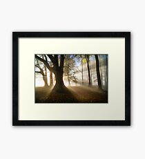 Misty Autumn Woods, Cotswolds, England Framed Print