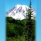 Mount Rainier iPhone Case by Elaine Bawden