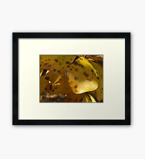Fall Leaves Series Framed Print