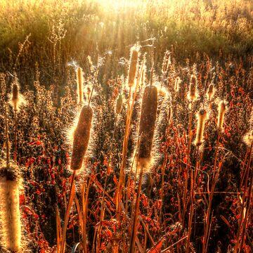 SunFuzz by boblarsonphoto