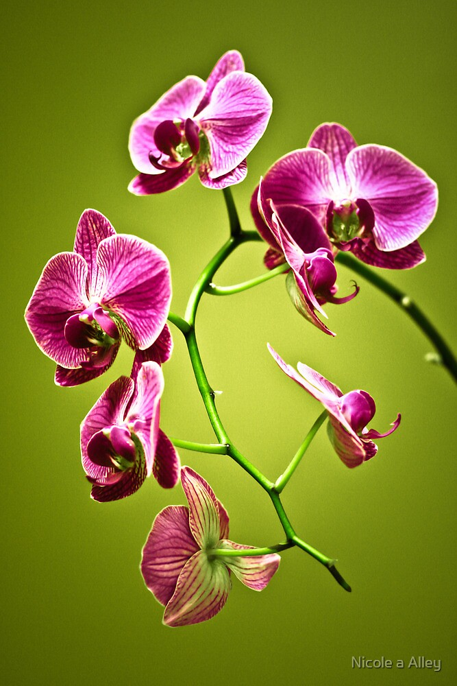 Orchid by Nicole a Alley