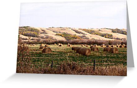 Valley Of The Bales by Leslie van de Ligt