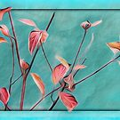 Red Twig Dogwood by jules572