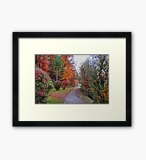 Colors of Fall. Germany. Framed Print