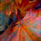 150 # # # # # I do Love You !!!  autumn leaves !!! Tribute to Frank Sinatra - Autumn Leaves .   by Brown Sugar . Favorites: 4 Views: 150 thank you ! by © Andrzej Goszcz,M.D. Ph.D
