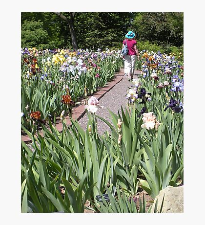 Lady Walking in a Iris Garden in Spring Photographic Print