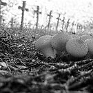 In the silence from a graveyard. by alaskaman53