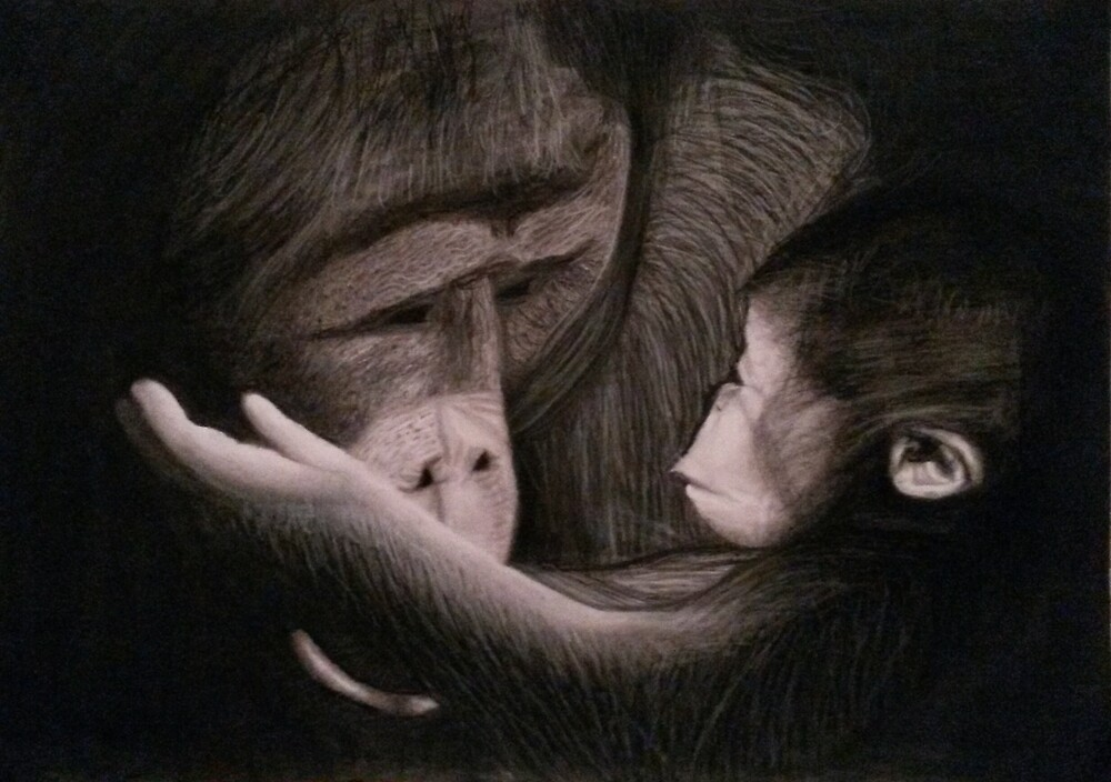 Orangutan Mother and Child Charcoal Drawing by Ruth Kellaway