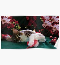 Christmas Maine Coon Kitty Cat w/ Big Eyes ~ Cute Feline Kitten w/ Paws Stretched Waiting for Santa Claus on Xmas Eve Poster