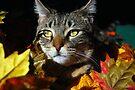 My October Beauty by jodi payne