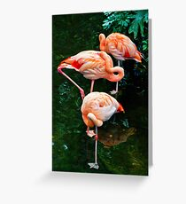 Pink Flamingoes Greeting Card