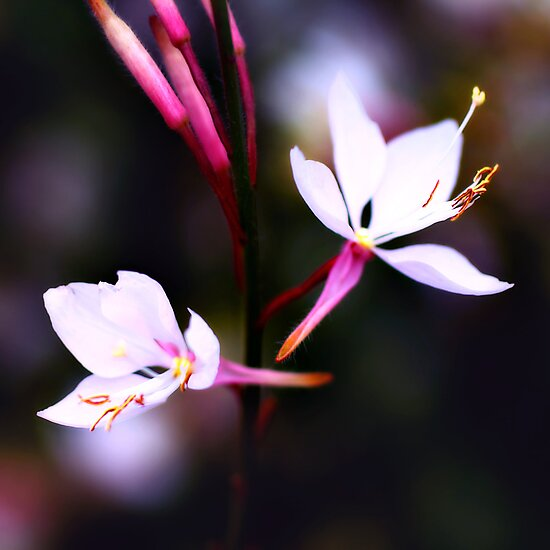 Colour Of Life XVII by Damienne Bingham