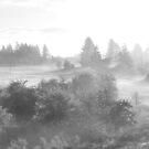 fog light by Robert C Richmond