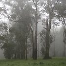 Misty morning in the Dandenongs by Christine Oakley